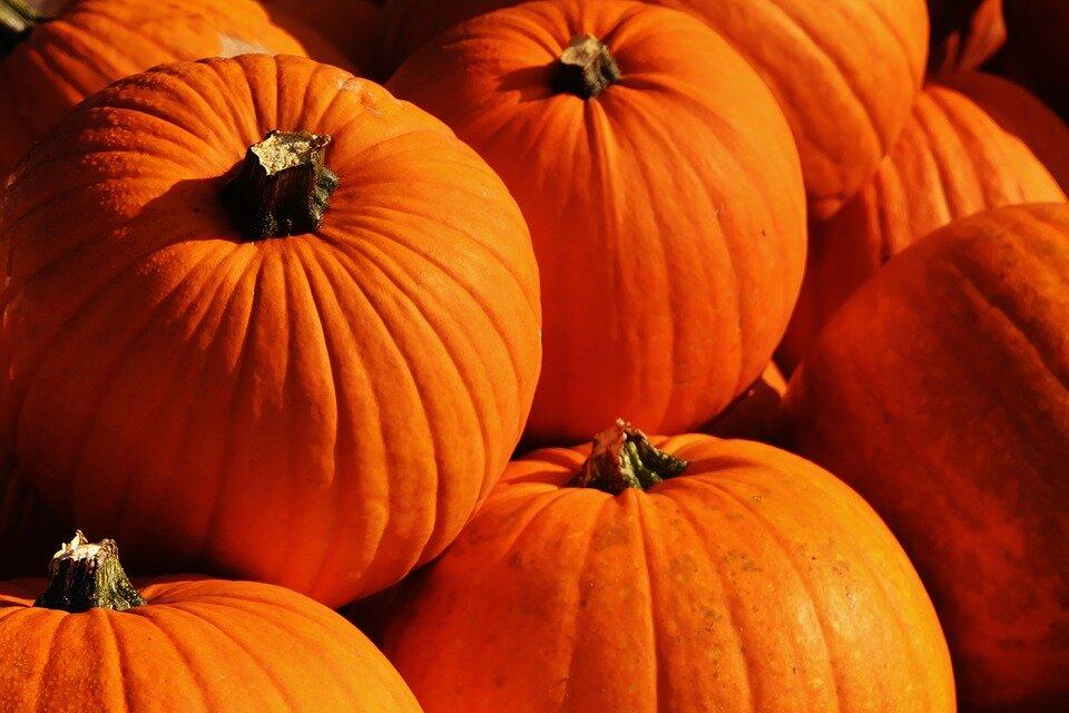 pumpkins-1659946_960_720