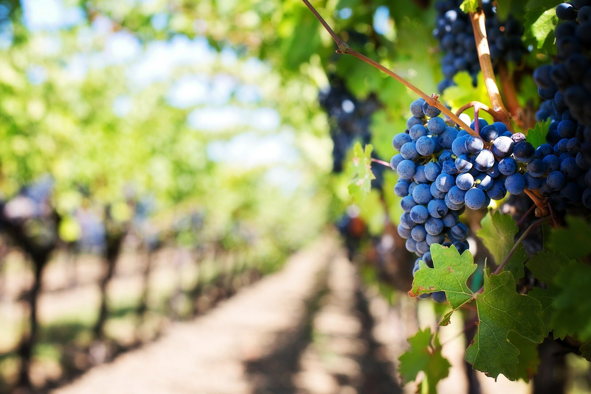 Moldova is famous for its wine